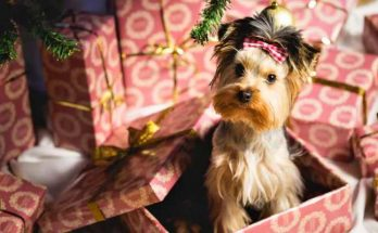 Perro gracioso dentro de una caja de Navidad