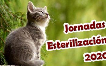 Jornada de Esterilización 2020